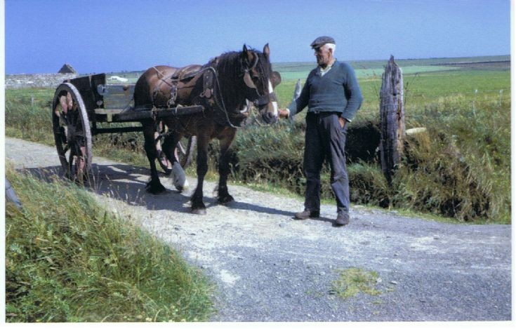 Last working horse on Stronsay?