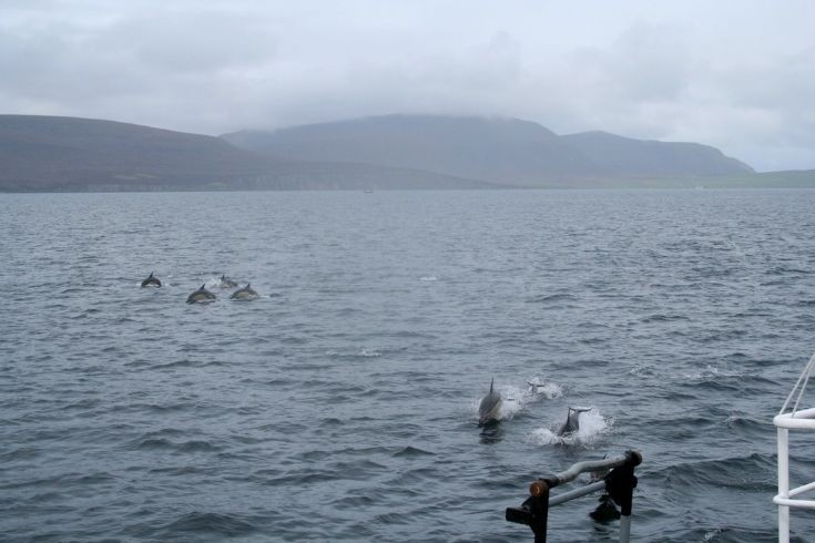 Dolphins off Houton
