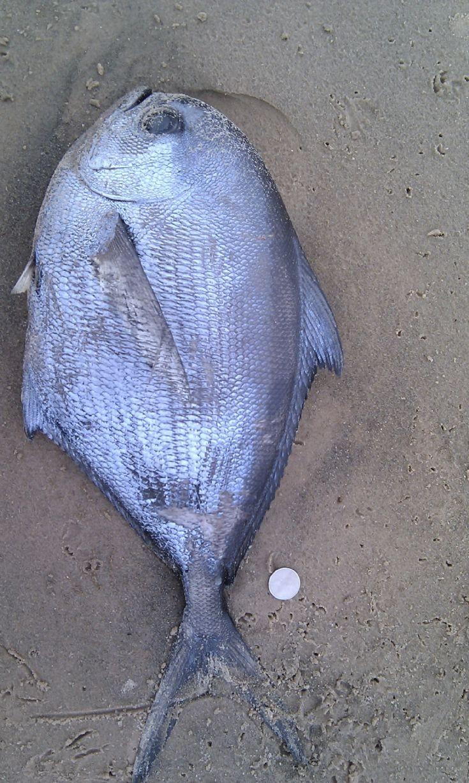 Fish washed up at Scapa