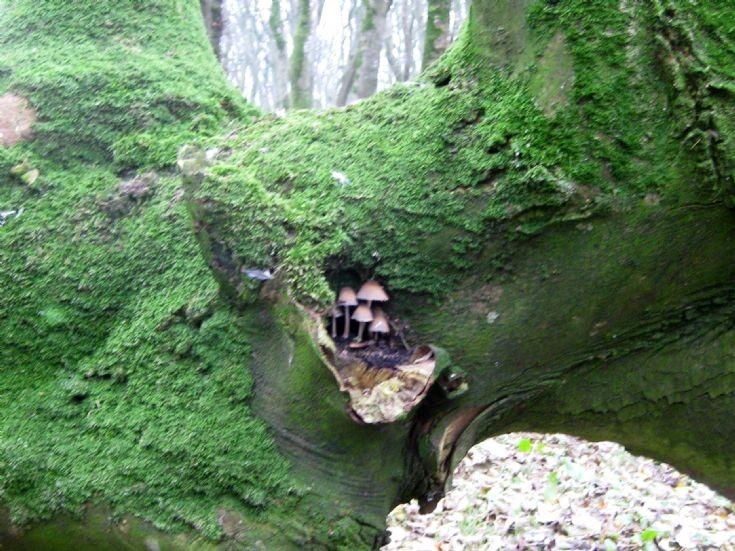 Peedie funghi Berstane Woods