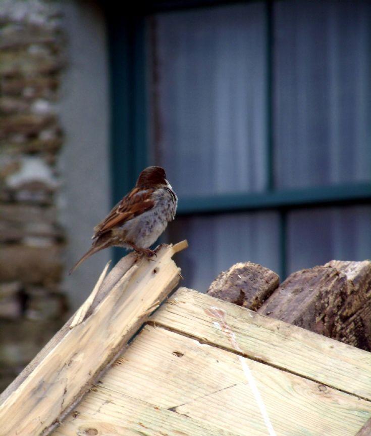 Mystery Bird 1st March 2012