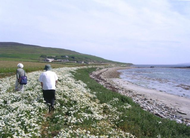 On the Westness Walk, Rousay