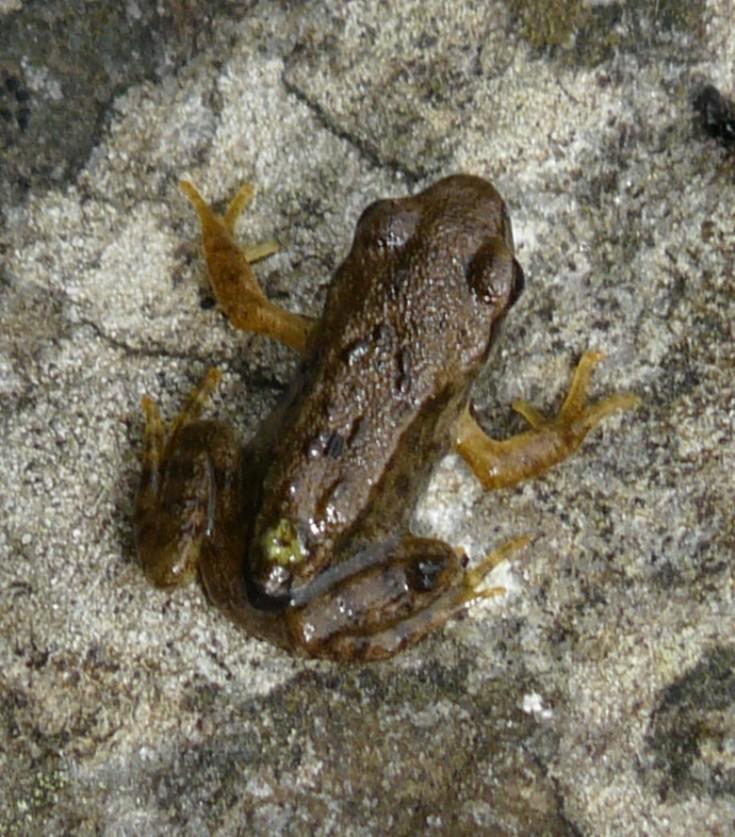 Frog exodus