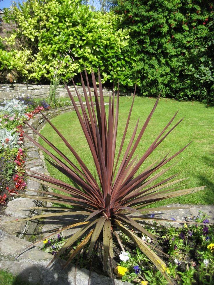 Alan Clouston's garden