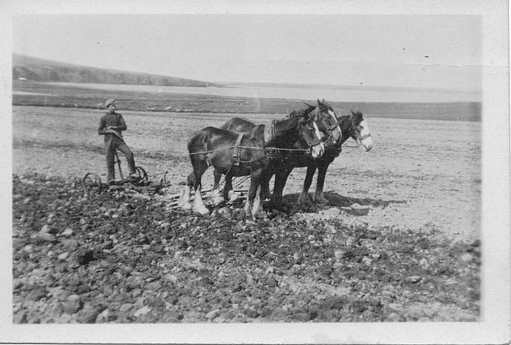 Bill Leslie ploughing at Grimsquoy