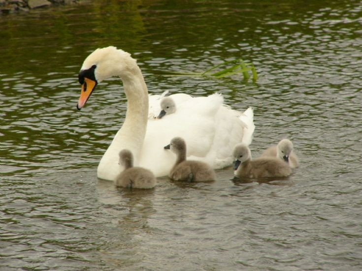 Proud mother with brood