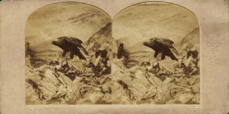 Hubbard stereoscopic view of an eagle