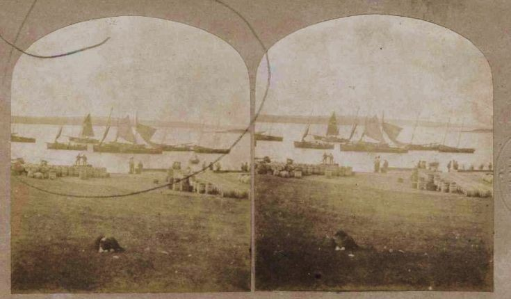 Stereo photograph of Fishing Fleet