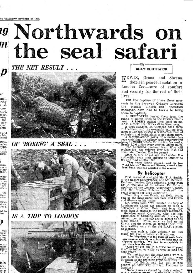 London Zoo seal-acquisition project #2