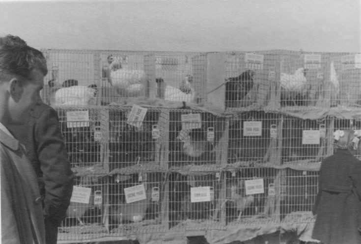 Dounby Agricultural Show 1956 (5/6)