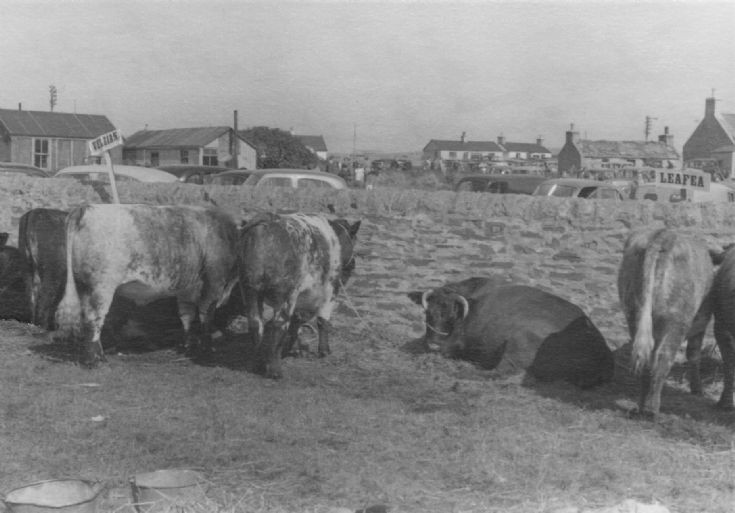 Dounby Agricultural Show 1956 (6/6)