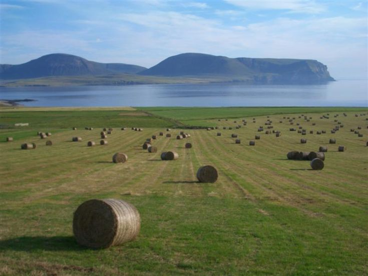 Round bales at Stromness