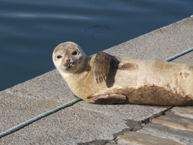 Seal in Kirkwall