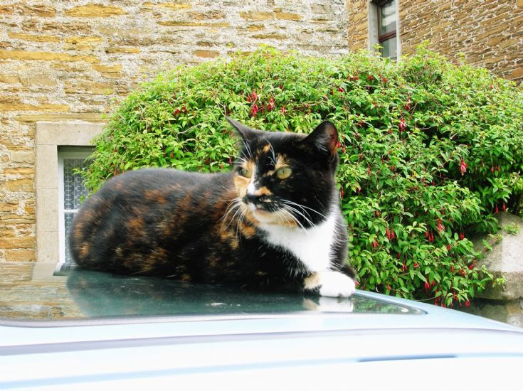 STROMNESS CAT 1