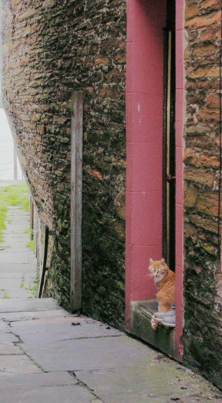 STROMNESS CAT