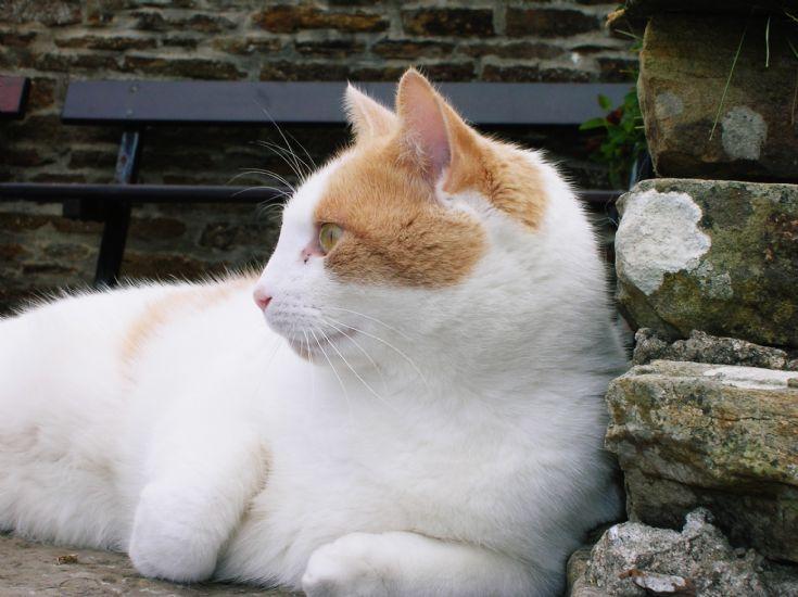 Stromness Cat 3