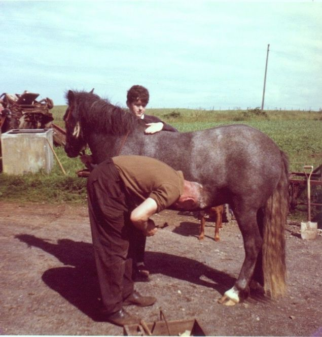 Horse shoeing at Roma, Holm