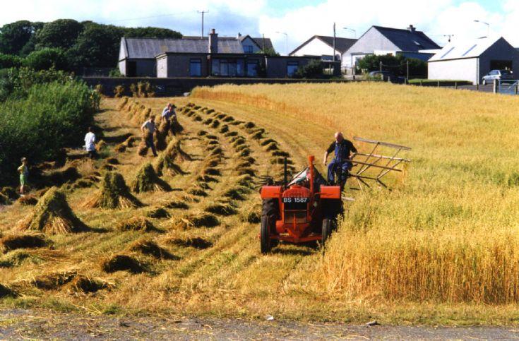 Cutting the oats at Ayran
