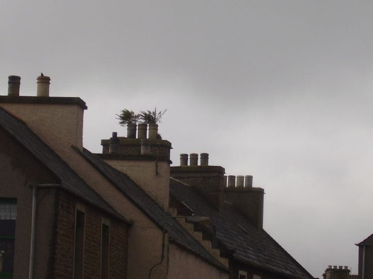 More roof top greenery