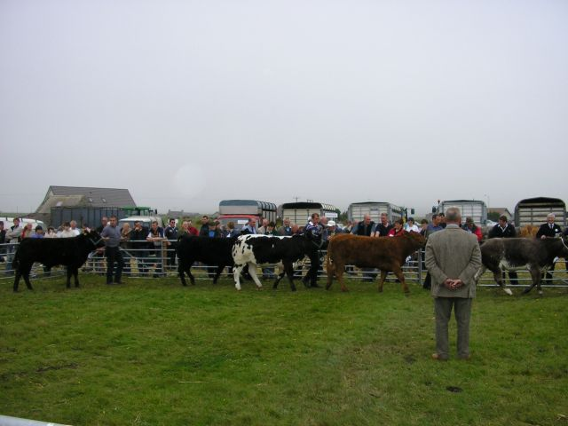 Cattle judging at the 2004 Dounby Show