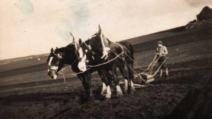 Ploughing in Egilsay