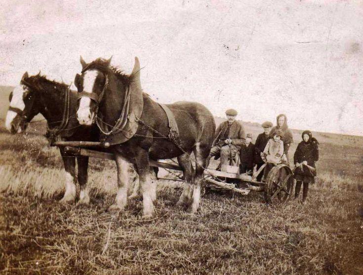 Harvest in Egilsay