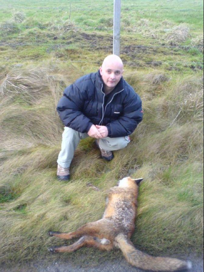 Orkney Fox ?