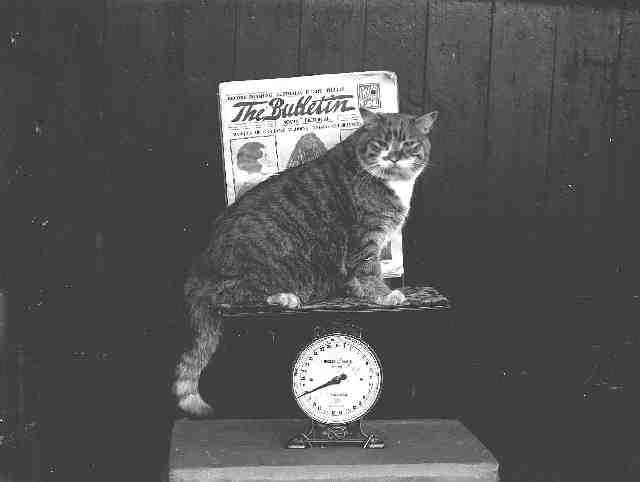 Fat Cat (20lbs)