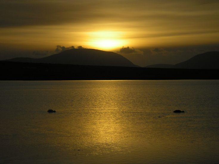 Feeding swans on Stenness Loch