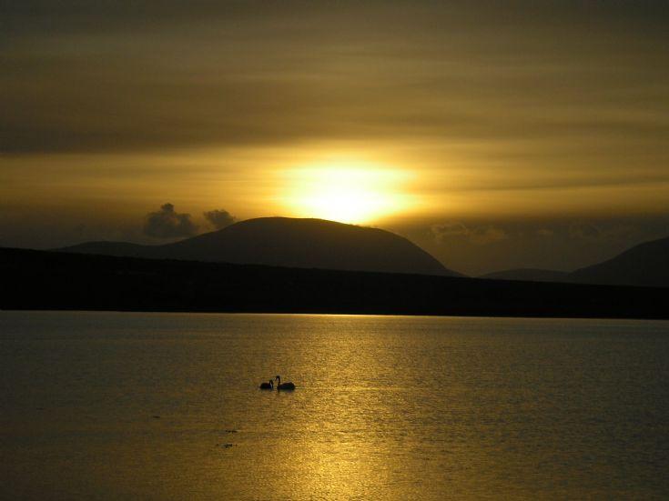 Swans in sunset, Stenness Loch