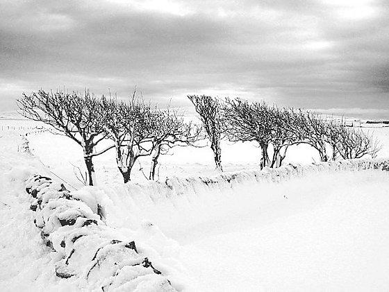 Sandwick Trees