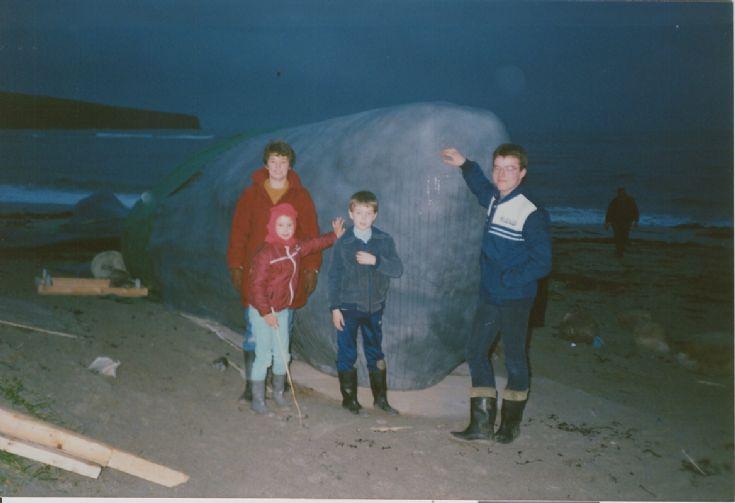 Venus Peter Whale