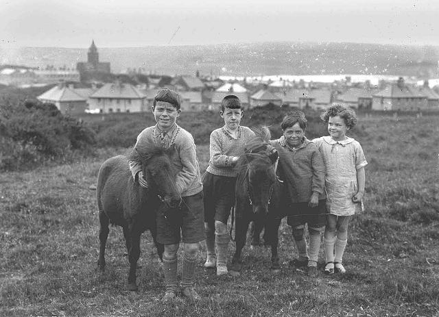 Shetland ponies in Carter's Park, Kirkwall