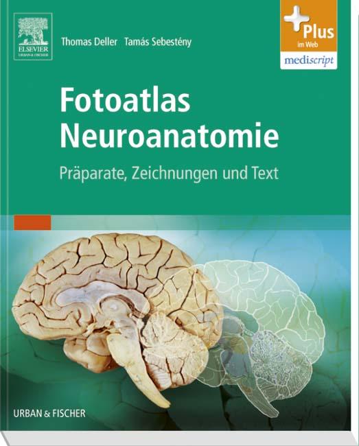 Plus im Web : Fotoatlas Neuroanatomie