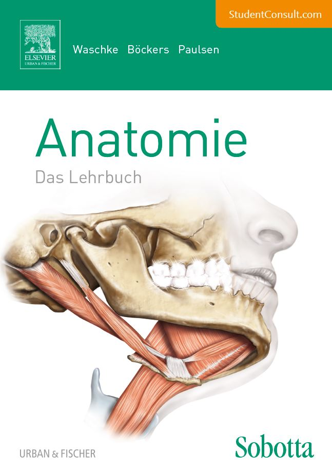 Plus im Web : Anatomie