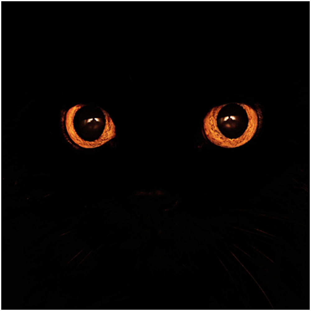 Plainpicture helloween eye p1540m2108991