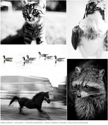 Plainpicture animals