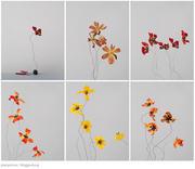 Plainpicture flowers p444 mueggenburg