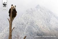 Panda4 1
