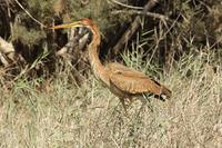 2014.09.16 heron release in the grass simar johnaldridge smaller