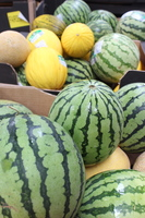 Melons 2015 %282%29