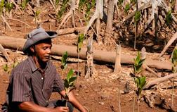Mad kalamboro mitsinjo planting c erp
