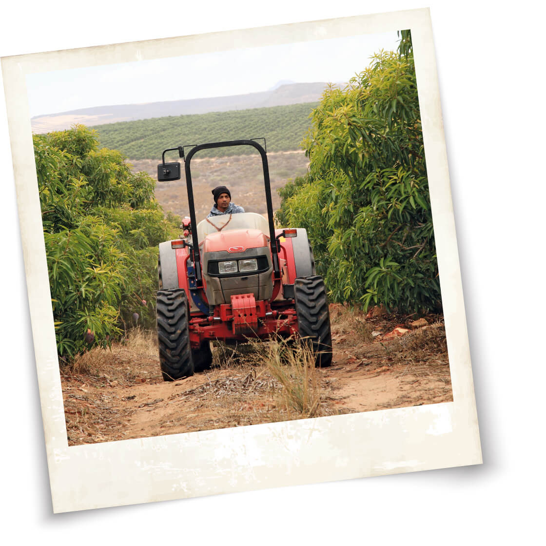 Cape Mangoes farming with heartr