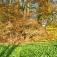 Herbstausflug für naturliebende Singles aus Rheine, Steinfurt, Münster und Umgebung!