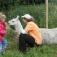 Kleine Tierpflegeschule mit Lamas
