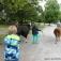 Tiererlebnis-Ferien für Kinder mit Lamas