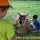 Lama-Erlebnisbegegnung für Kinder