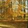 Herbstspaziergang für Singles in Lingen, Meppen und Nordhorn - schließen Sie sich an!