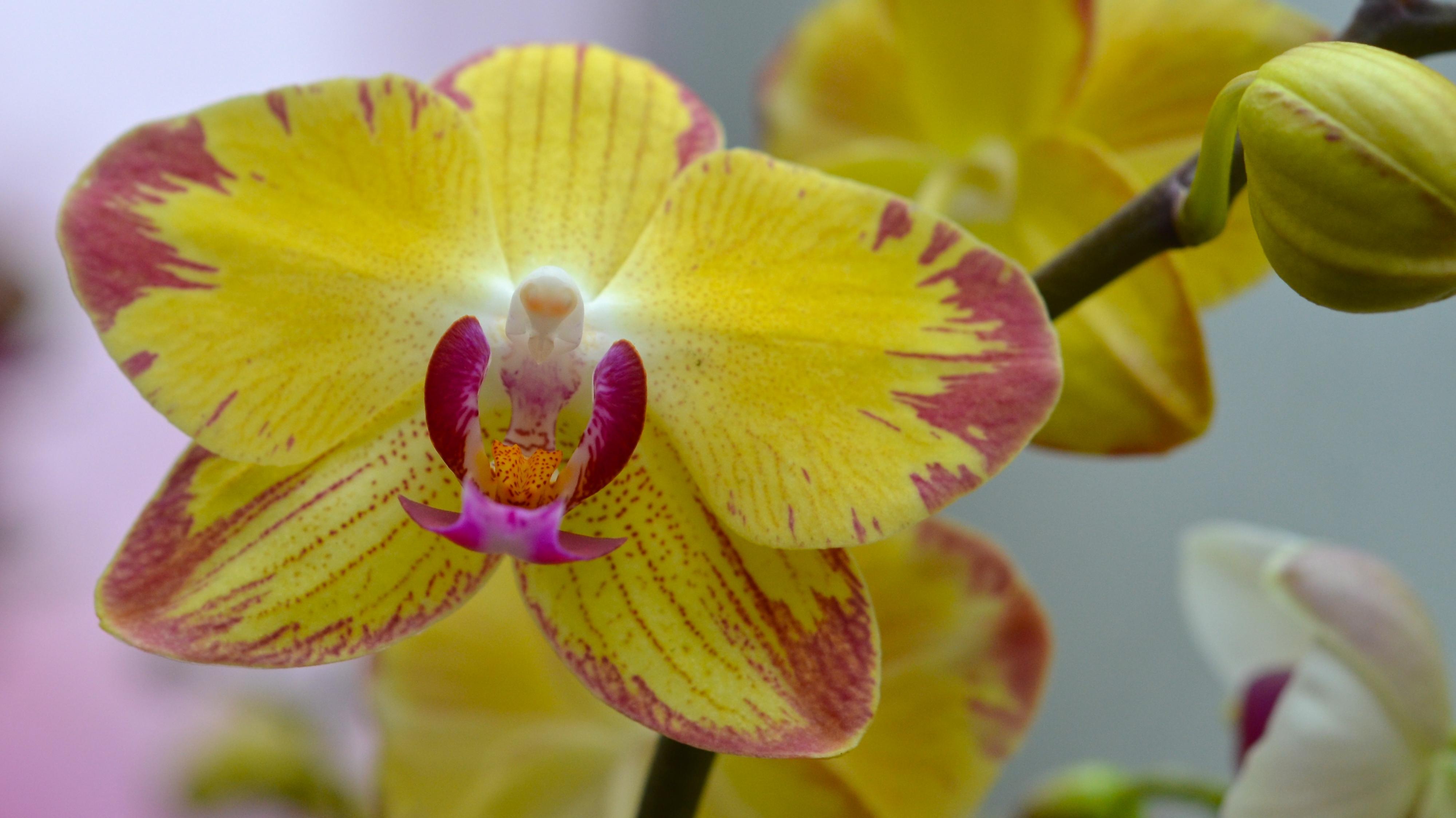 orchideenwelt in k ln am dinger 39 s gartencenter k ln. Black Bedroom Furniture Sets. Home Design Ideas