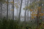 Power-Seminar im März - Die Kraft der Bäume